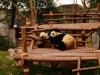 a-panda_0