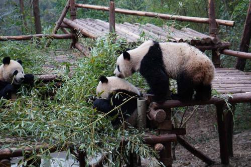 Studietur2016 - Chengdu