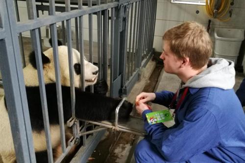 Studietur2018 - Dujiangyan og panda
