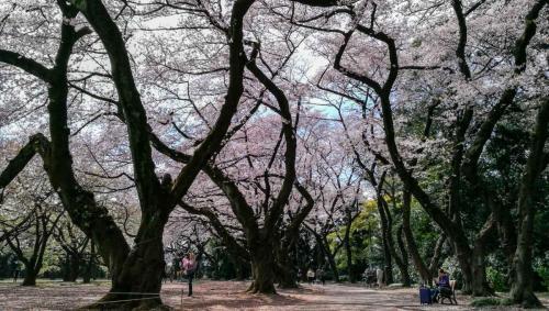 Studietur2019 - Tokyo og Kamakura